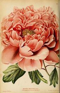 25+ Free Vintage Printable Floral  - 200 Floral Tattoos - Beautiful Flower Designs, Ideas for Tattoos